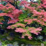 圓徳院庭園