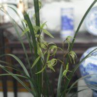 上海植物園 蘭室