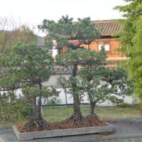 杭州植物園 盆栽園